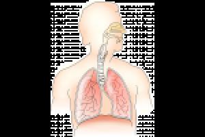 Lern schwimmen mit tri2b: Beinschlag und Atmung - YouTube