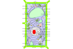 Сделать обозначение по схеме строение клетки
